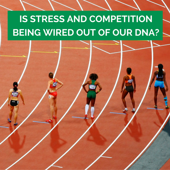 Is Stress and Competition Being Wired Out of Our DNA?